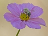 Late Season Bee