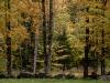 Pasture Foliage