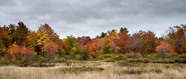 Wetland Foliage #2