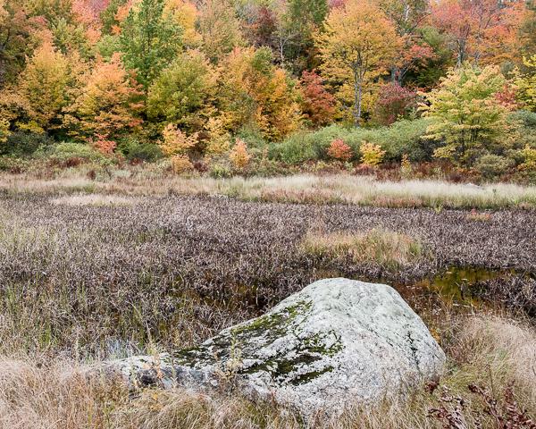 Wetland Foliage #3