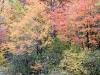 Wetland Foliage #1