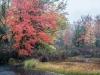 Autumn Wetland in the Rain