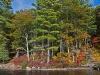 Lakeside Foliage #5