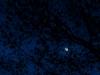 Moon Through Early Oak Leaves