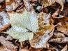 Season's First Snow #3