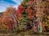 Wetland Margin in Autumn