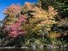 Lake Shore Foliage #3