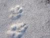 Tracks on a Frozen Lake #3