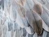 Crane Feathers (detail)