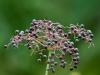 Wild Flower #3