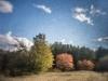 Field's Edge In Autumn