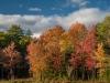 Wetland Margin Foliage