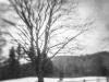 Bass Farm Tree #5