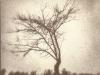 Apple Tree #2