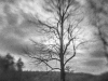 Hayfield Tree #1