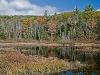 Gregg Lake Wetland