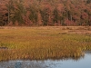 Early Autumn Color at Wetland Edge #2