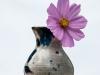 Garden Flower #3