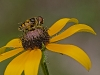 Bee on Flower #1