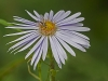 Fly on Aster