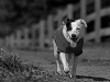 Daisy -- Headed Back to the Barn