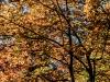 Maple Foliage (detail)